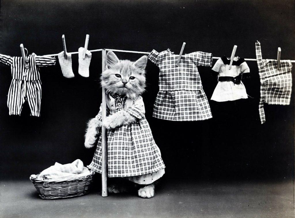 洗濯物を干す猫