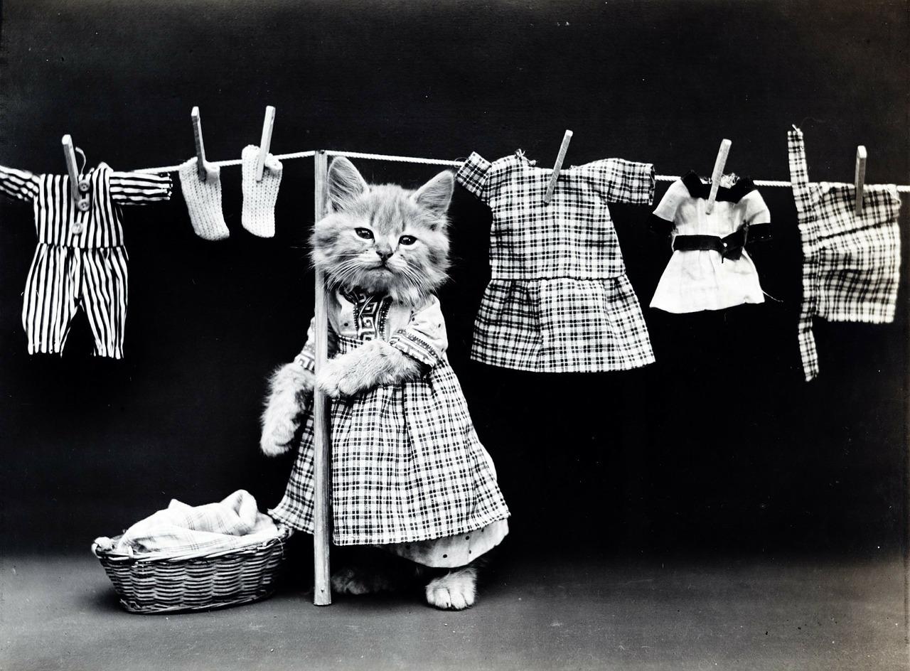 洗濯物を干すネコ