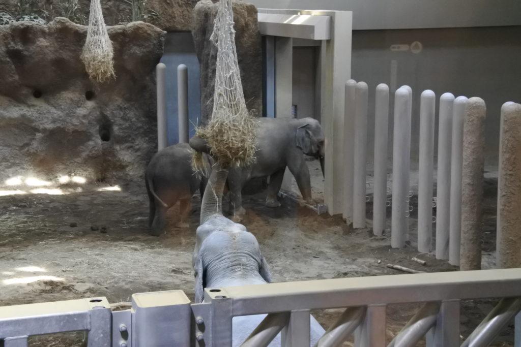 札幌にいる象