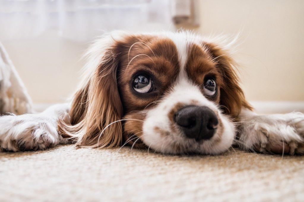 うつぶせの犬-うつ病のイメージ