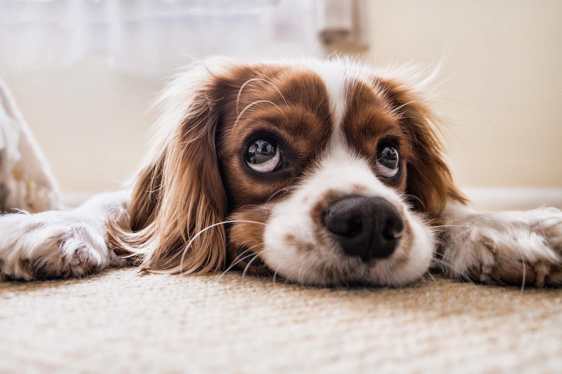 考えごとをしている休日の犬