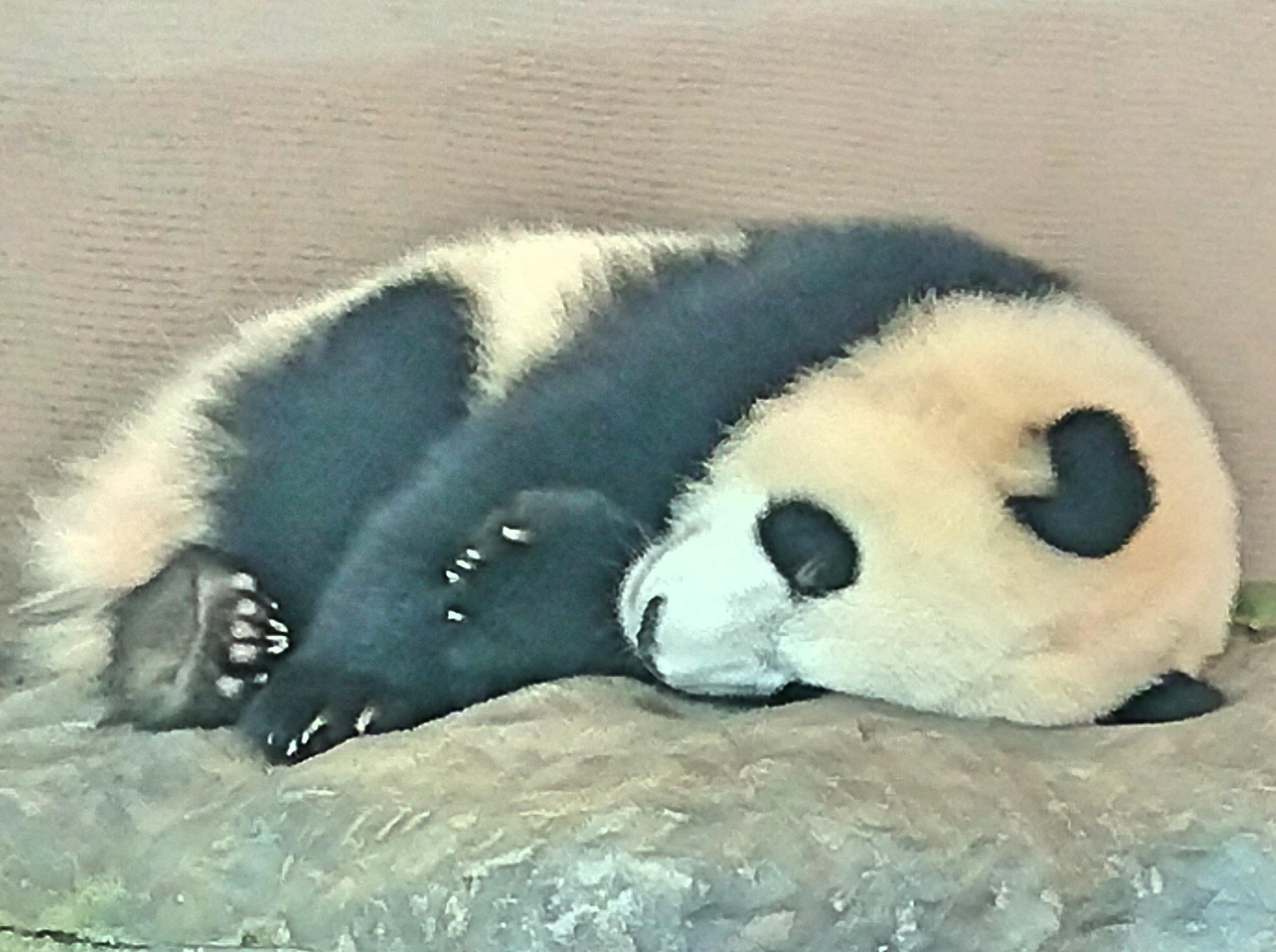 パンダ-うつ状態