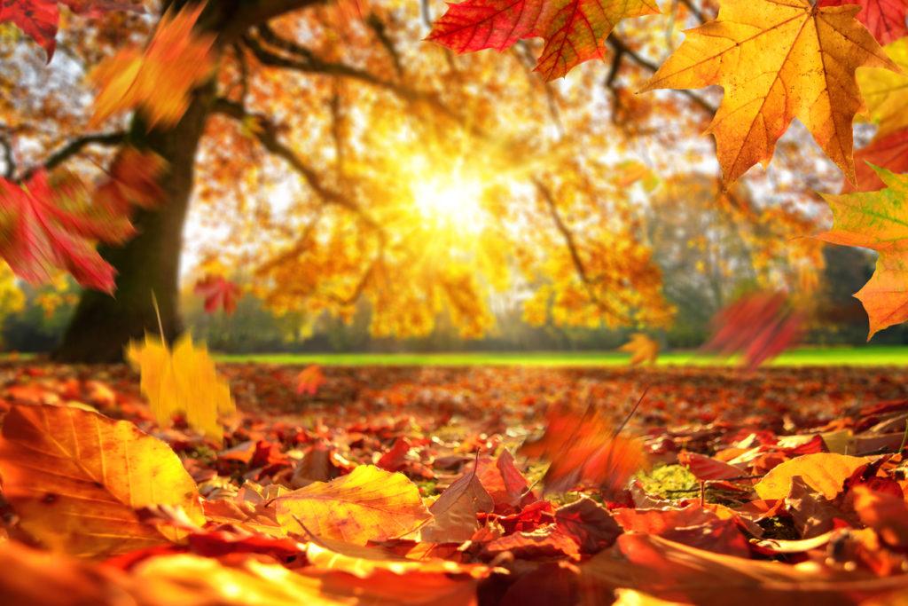 秋の落ち葉と夕暮れ
